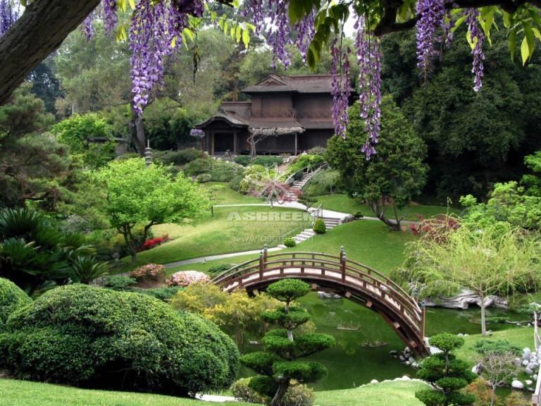 Thiết kế và thi công vườn Nhật