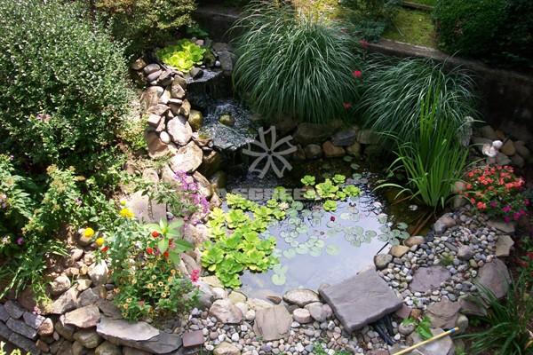 Những ý tưởng tạo hồ nước nhỏ cho sân vườn