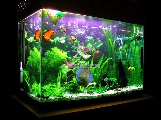 Asgreen giúp bể cá nhà bạn luôn sạch sẽ