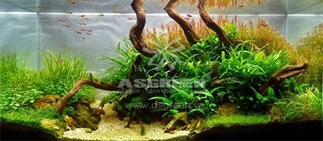 aquascaping-112