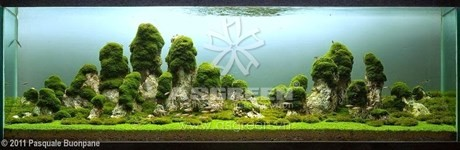 aquascaping-162
