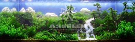 aquascaping-72
