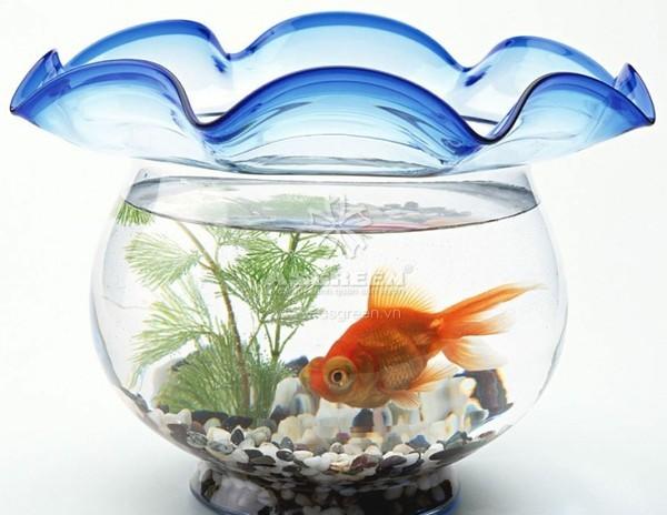 Đa dạng các loại cá cảnh để cho bể cá có nhiều hình dáng lung linh, ấn tượng, giúp bạn phấn chấn tinh thần.
