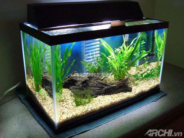 Chọn hình dáng bể cá hợp phong thủy để thu hút tài lộc