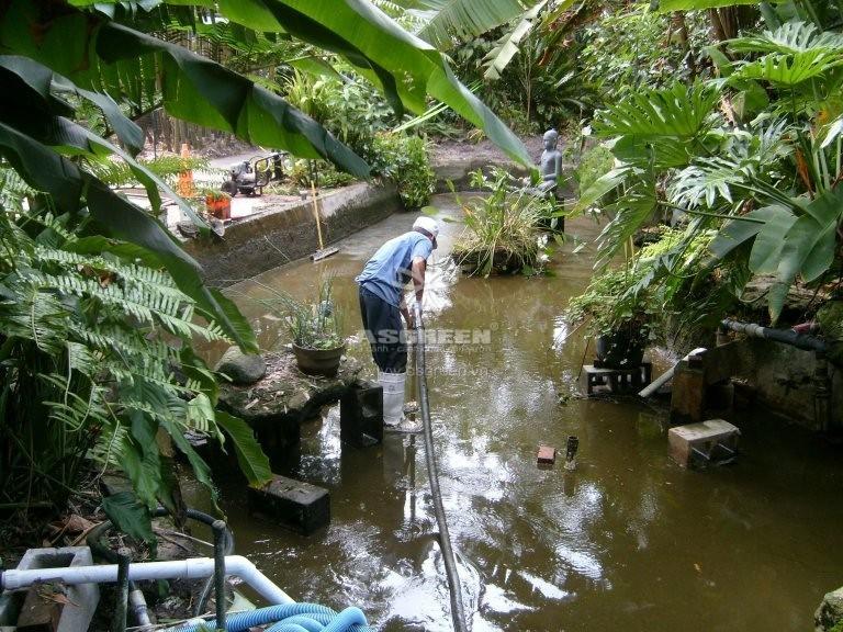 Dịch vụ vệ sinh chăm sóc hồ cá Koi