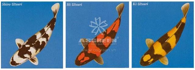 Utsuri-koi
