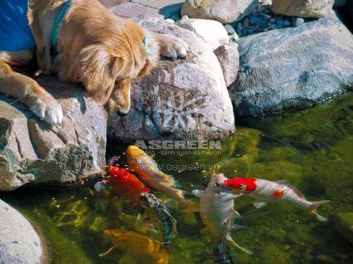 Cá chép Koi nhả ngọc phun châu, tiền vô như nước