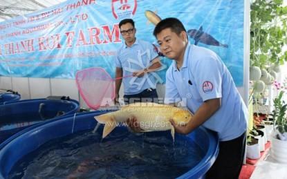 """Loài cá """"nhà giàu"""" có tuổi thọ lên tới 60 năm ở Việt Nam"""