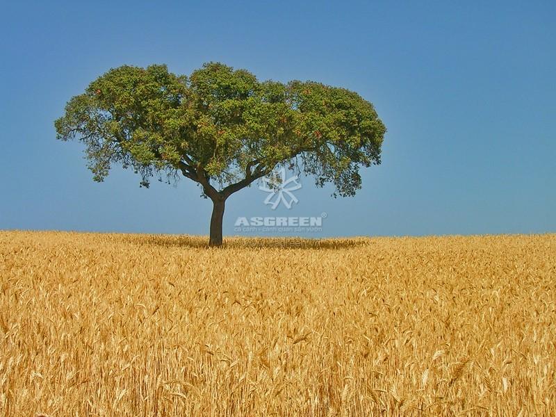 Cảnh quan nông nghiệp vùng ôn đới - cảnh quan là gì