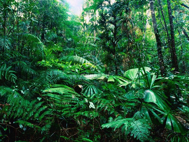 Cảnh quan rừng mưa nhiệt đới - cảnh quan là gì