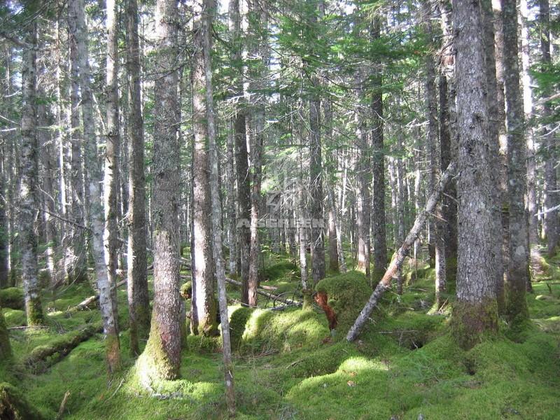 Cảnh quan rừng phương bắc - cảnh quan là gì