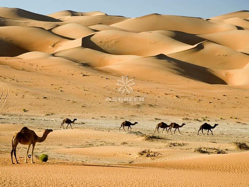 Cảnh quan xa mạc - cảnh quan là gì?