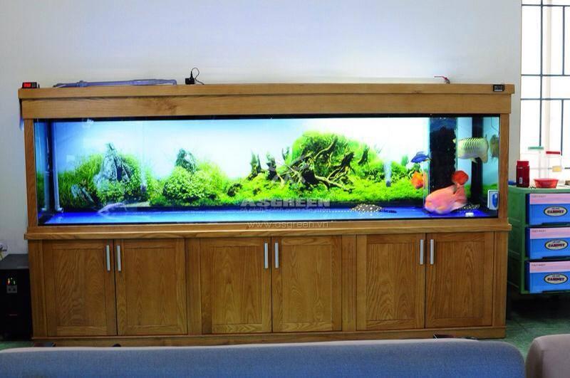 Tùy vào loài cá nuôi và số lượng mà chọn kích thước bể hợp lý