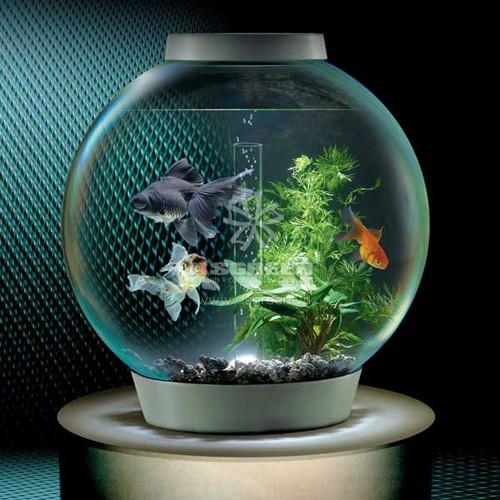 Nên chú ý đến bộ lọc để nước trong bể luôn được trong sạch