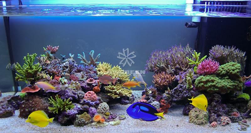 Bạn nên trang trí thêm cây, đá và sỏi cho bể cá hấp dẫn hơn