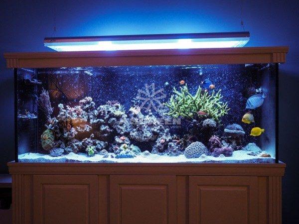 Bể cá cảnh biển khung kính ốp gỗ