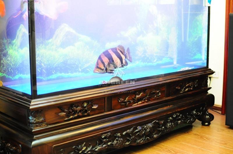 Bể cá gỗ gụ cao cấp