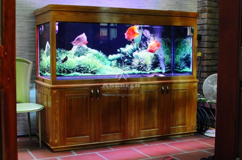 Bể cá cảnh đẹp – Asgreen.vn