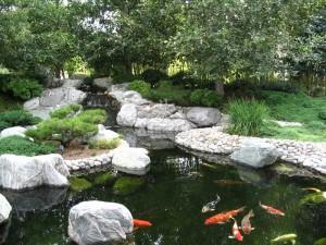 Mẫu hồ cá Koi truyền thống Nhật Bản 38