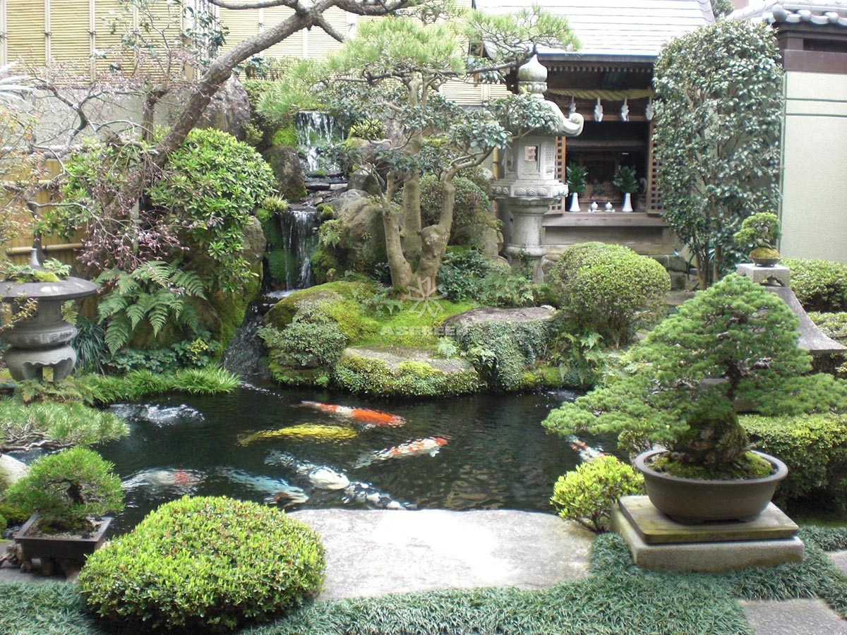 M u h c koi truy n th ng nh t b n p nh t for Japanese garden san jose koi fish