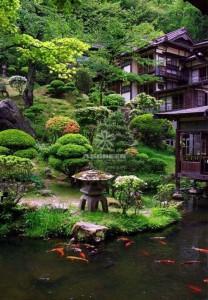 Mẫu hồ cá Koi truyền thống Nhật Bản 07