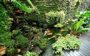 Mẫu hồ cá Koi truyền thống Nhật Bản 08