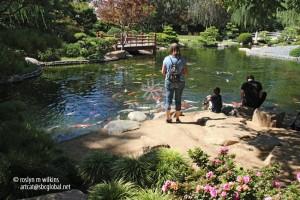 Mẫu hồ cá Koi truyền thống Nhật Bản 17