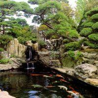 Mẫu hồ cá Koi truyền thống Nhật Bản 20