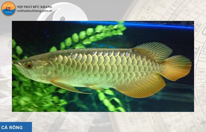 Cá rồng hợp phong thủy mệnh Kim