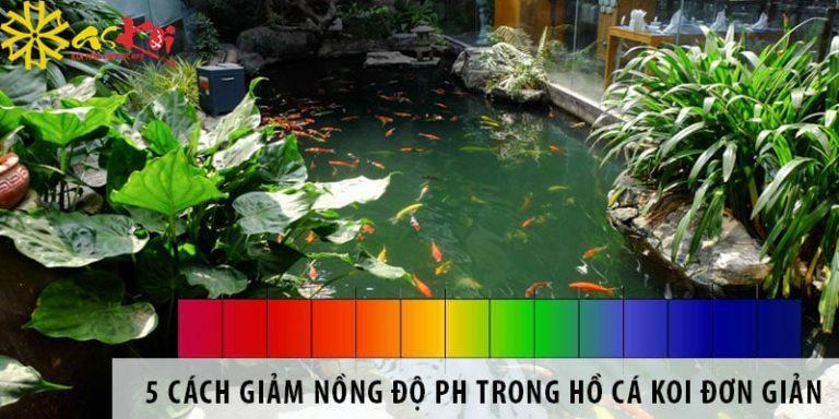5 cách giảm nồng độ pH trong hồ cá koi đơn giản