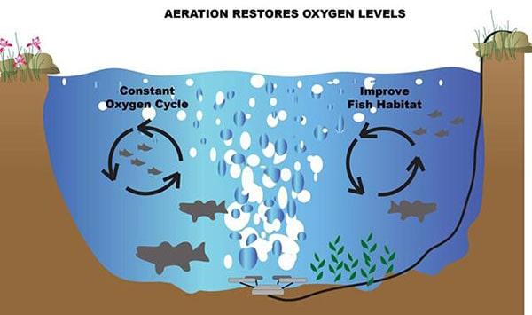 Sục khí từ máy thổi khí cho hồ cá koi