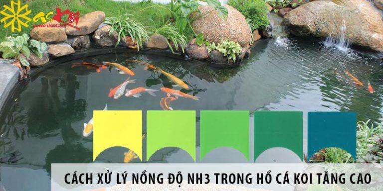 Nồng độ của NH3 trong hồ cá koi tăng cao và cách xử lý